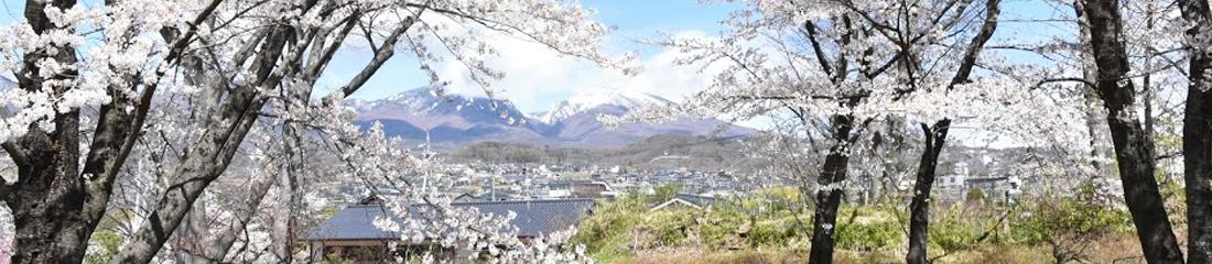桜まつり イメージ画像