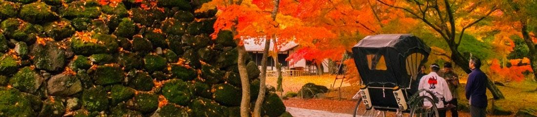 紅葉まつり イメージ画像